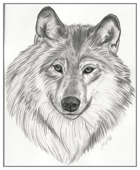 Drawings Of Animals by Drawings Animals On Behance Pics Behance