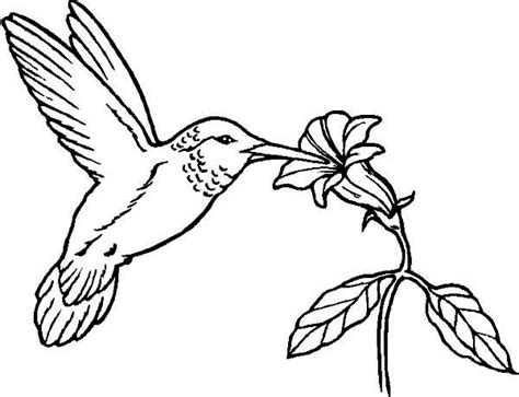 coloring pages hummingbirds flowers hummingbirds flowers provide nectar for hummingbird to