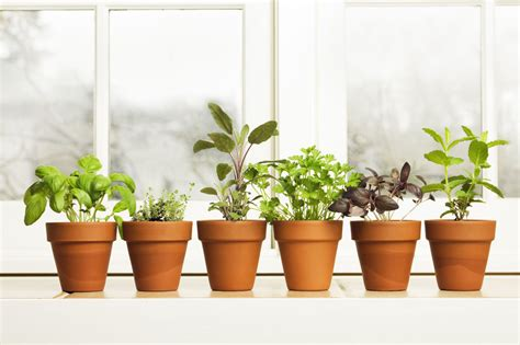 Window Sill Planter Indoor by How To Grow Herbs And Spices Indoors Clickhowto