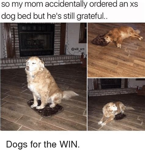 Dog In Bed Meme - 25 best memes about bedding bedding memes