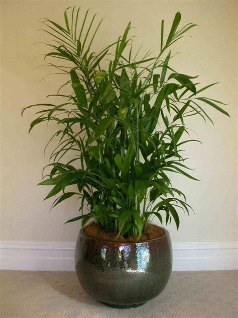 plants that do well indoors 1000 images about indoor plant ideas on pinterest