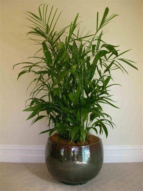 best tall indoor plants 78 best images about plants on pinterest swords snake