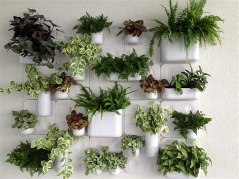 plants for wall gardens best 25 plant wall ideas on garden wall