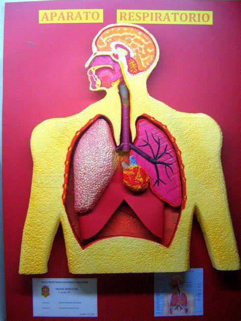 como hacer una maqueta del sistema respiratorio crearts maqueta sistema respiratorio