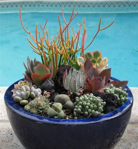 70 Indoor And Outdoor Succulent Garden Ideas Shelterness Succulent Planter Ideas