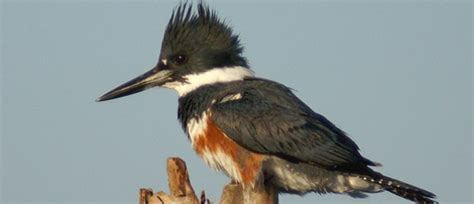 birding in nw florida