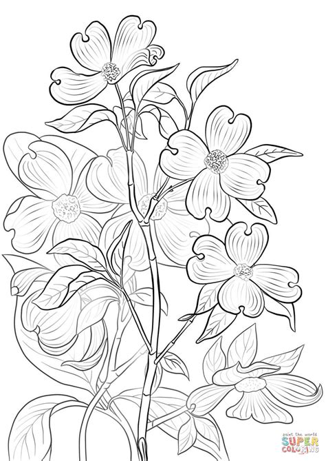 coloring page of dogwood flowers flowering dogwood coloring page free printable coloring