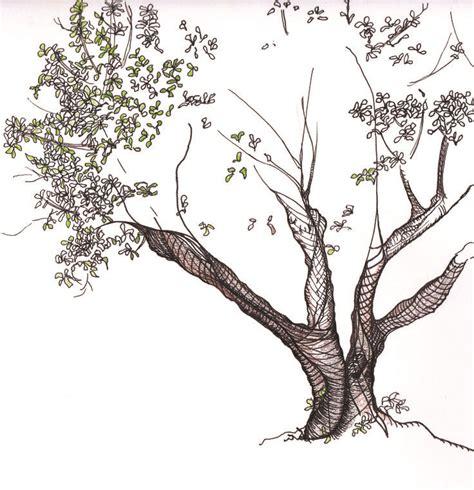line drawings trees line drawing tree drawings