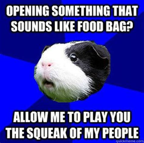 Shaved Guinea Pig Meme - shaved guinea pig meme 100 images 150 gorgeously cute
