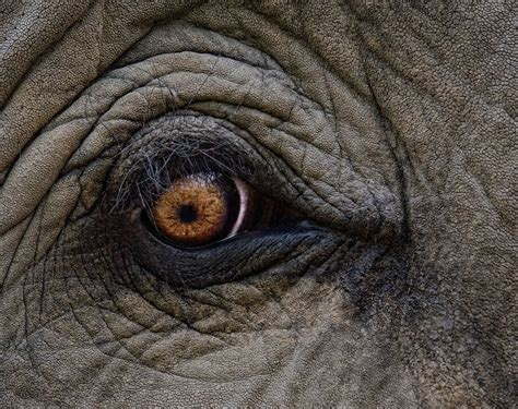 what color are elephants a sight to behold elephant vision the kota foundation