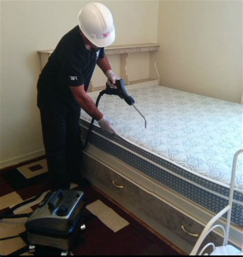 bed bug extermination process bed bug best pest control in the greater toronto area gta