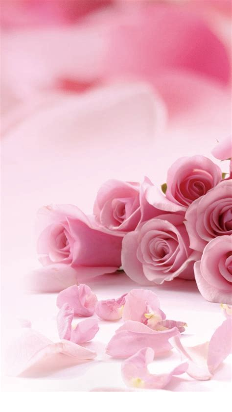 pink roses valentines day 30 iphone wallpaper free to