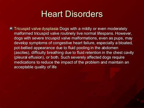 shih tzu breathing problems symptoms genetic disorders shih tzu