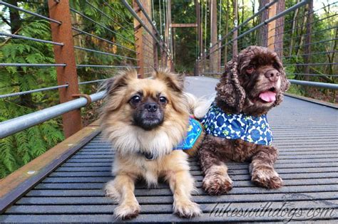 pugs washington state 15 best hiking in and around bellevue images on seattle hiking trails and