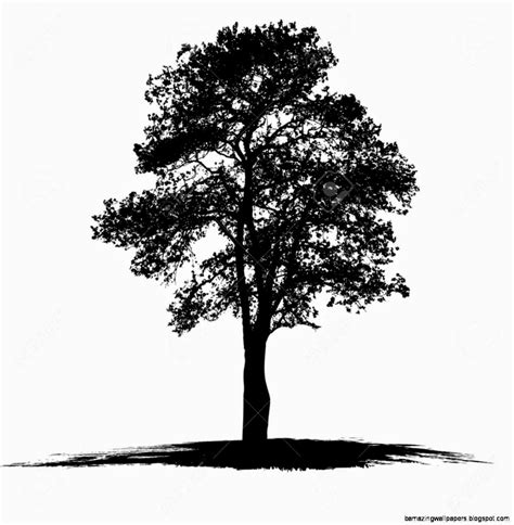 black and white tree drawings amazing wallpapers