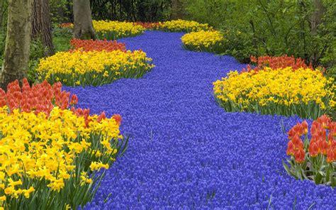 amazing flower garden 1680x1050