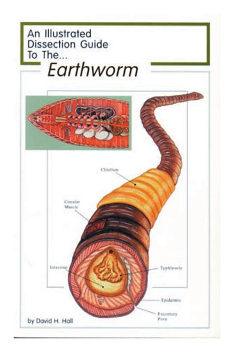 earthworm dissection classification fisher science education dissection guide to the earthworm dissection