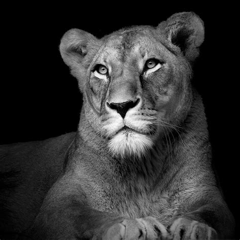 black and white animals black and white animal portraits by lukas holas traveleering