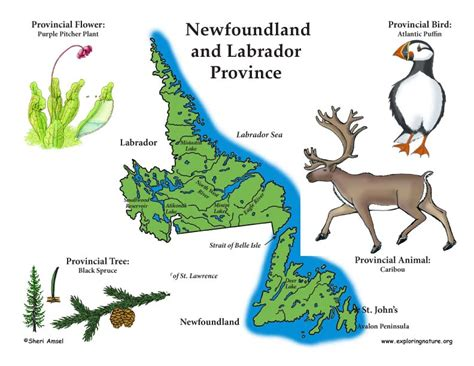 newfoundland map coloring page canadian province newfoundland and labrador