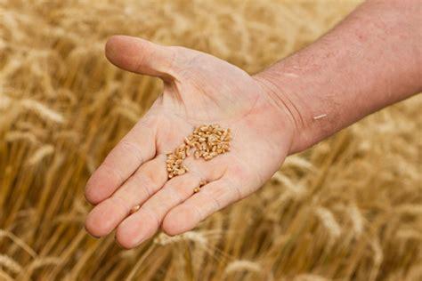 ccnl alimentare ccnl industria alimentare accordo di rinnovo ccnl