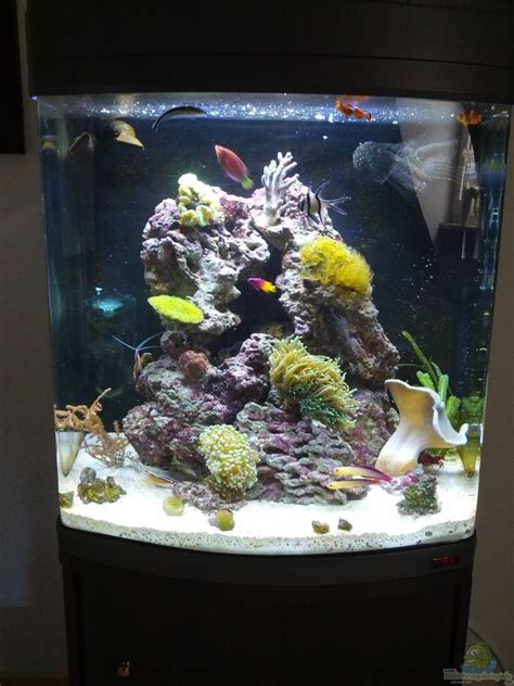 uv l zeeaquarium aquarium von kingtritonbs sera marin led 130