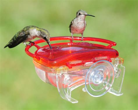 gem window hummingbird feeder