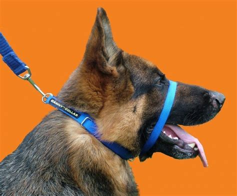collars for dogs that pull canny collar no pull collar gentle halter collar to stop pulling