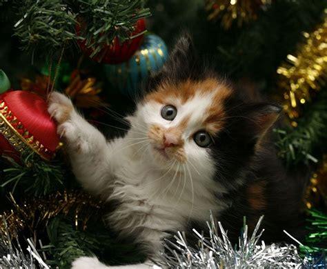 imagenes navidad gatitos los gatos y los 225 rboles de navidad mundogatos com