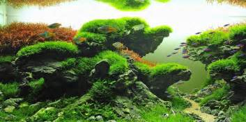 Guide To Aquascaping Understanding Taiwanese Aquascaping Style The Aquarium Guide