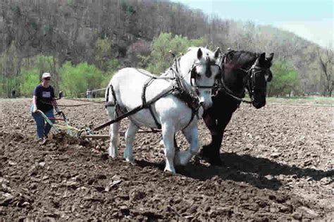 amish plowing with a seven hitch plow harness get free image about wiring diagram