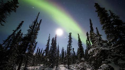 snowy alaskan cluster light tree borealis above denali national park alaska wallpaper wallpaper studio 10 tens of