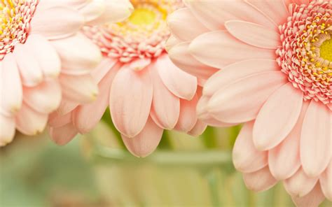 Image Gallery Light Pink Flower Wallpaper Pink Flower Lights