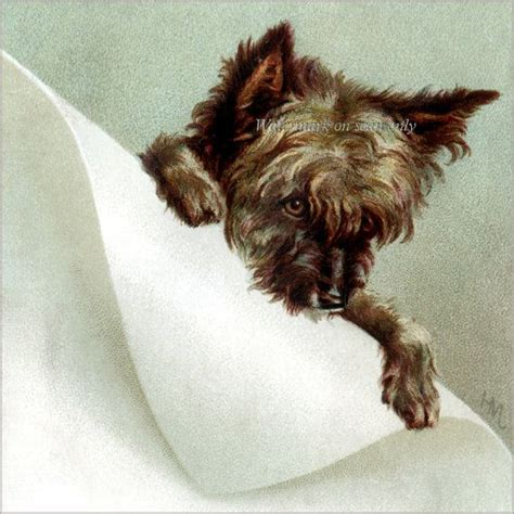 scruff from cairn terrier club print by barbara bradbury 66 best cairns rule images on pinterest cairn terrier
