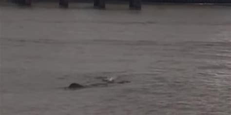 Thames River Monster | river thames monster nessie creature filmed in london