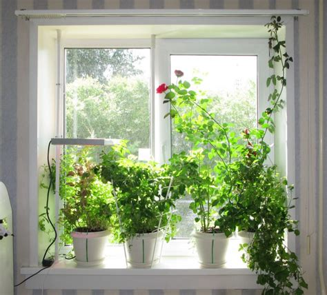 Plants On Windows 7 Simple Ways To Maximize Light In Your Home