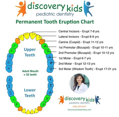 when do babies start seeing color permanent tooth eruption pediatric dentist in frisco
