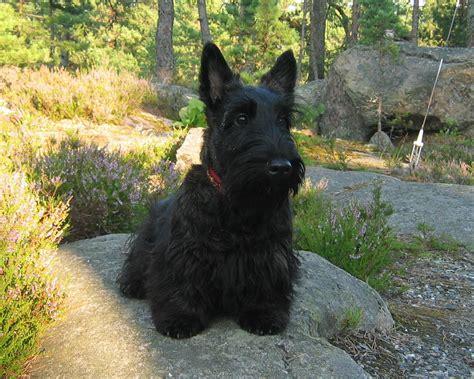 havashire wiki got pet allergies here s over 100 hypoallergenic dog