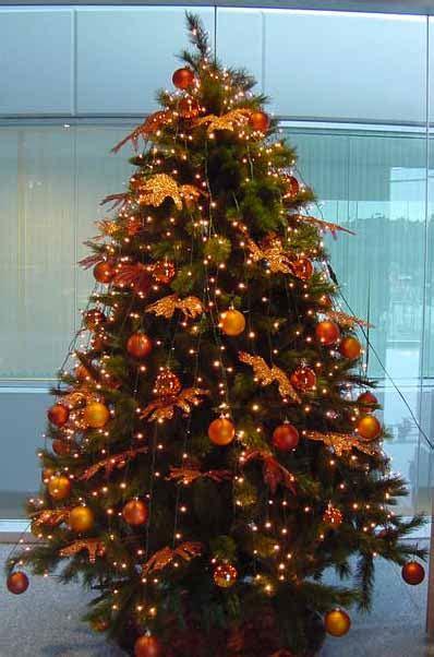 arbol d enavidad con colores naranjas pin de arboles naranja setas hojas papel tapiz fondo on