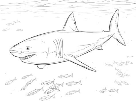 Ausmalbild Wei&223er Hai Mit Pilotfischen  Ausmalbilder Kostenlos Zum sketch template
