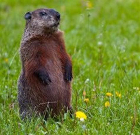 groundhog day australia groundhog day for australian renewable energy energy matters