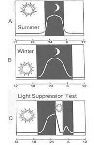 Journal Of Visual Impairment And Blindness Circadian Rhythm The Peper Perspective