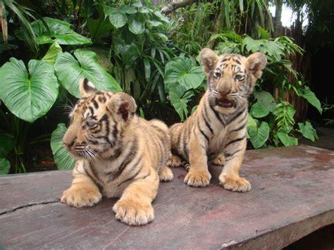 Bali Zoo Zoo With Lunch A Child bali zoo 187 bali hello travel