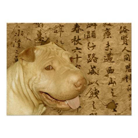 shar pei puppy cost ancient shar pei puppy poster zazzle