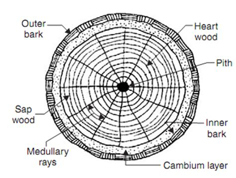 tree cross section diagram pinterest the world s catalog of ideas