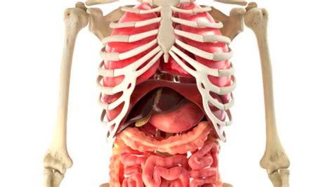 corpo umano interno corpo humano e 243 rg 227 os internos em rota 231 227 o de la 231 o v 237 deo