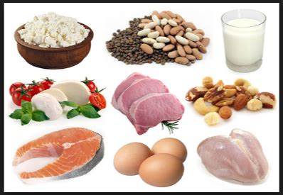 what are proteins and what are some exle of them in