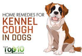 treatment for kennel cough in dogs 10 signs and symptoms that your is sick top 10 home remedies