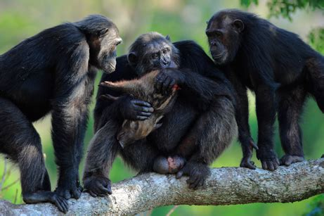 photos: best wild animal photos of 2008 announced