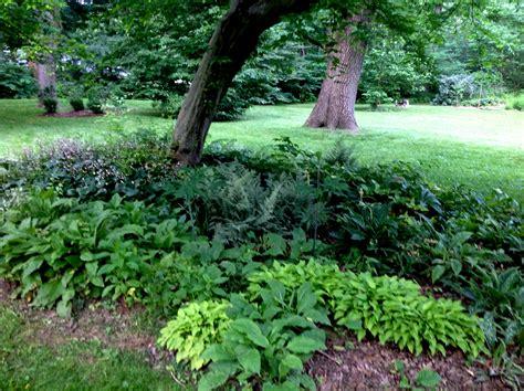 halbschatten garten landscape photos carolyn s shade gardens