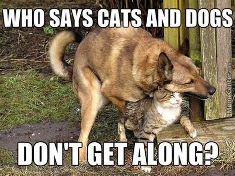 hug meme hug memes who says cats and dogs don t get along picsmine
